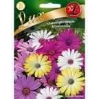 Nasiona kwiatów MIESZANKA Osteospermum W. LEGUTKO