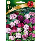 Nasiona kwiatów PINOCCHIO Goździk karłowy brodaty W. LEGUTKO
