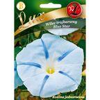 Wilec trójbarwny BLUE STAR nasiona tradycyjne 2 g W. LEGUTKO