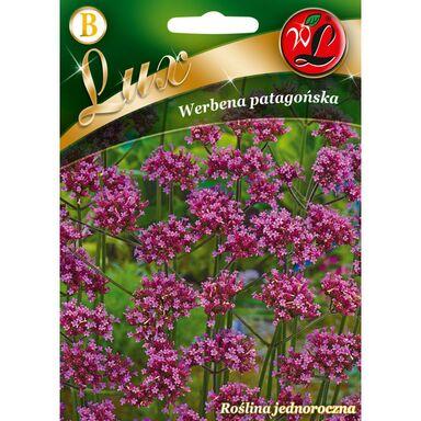 Nasiona kwiatów FIOLETOWA Werbena patagońska W. LEGUTKO