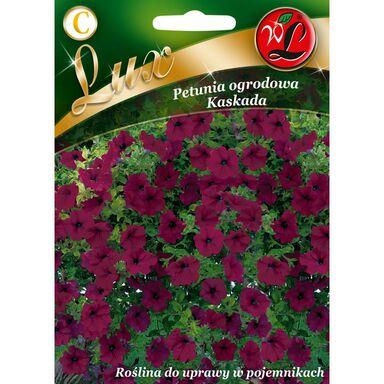 Petunia ogrodowa KASKADA nasiona tradycyjne 0.02 g W. LEGUTKO