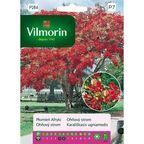 Płomień Afryki nasiona tradycyjne 4 g VILMORIN