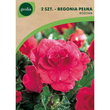 Begonia pełna różowa 2 szt. cebulki kwiatów GEOLIA
