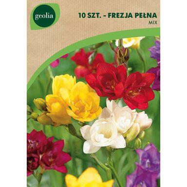 Frezja pełna MIX 10 szt. cebulki kwiatów GEOLIA