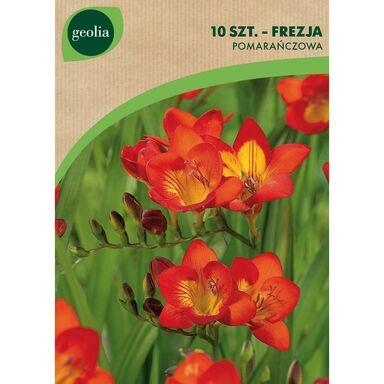 Frezja pojedyncza 10 szt. cebulki kwiatów GEOLIA