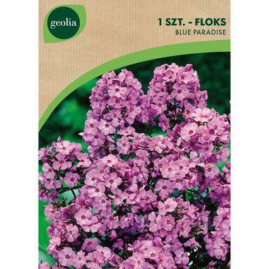 Cebulki kwiatów BLUE PARADISE Floks wiechowaty 1szt. GEOLIA