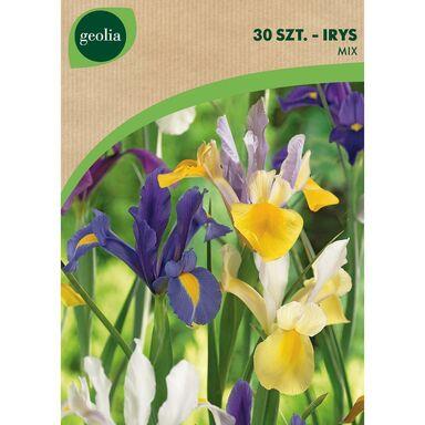 Cebulki kwiatów MIX Irys holenderski 30szt. GEOLIA