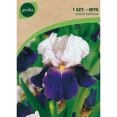 Cebulki kwiatów NIGHT EDITION Irys bródkowy 1szt. GEOLIA