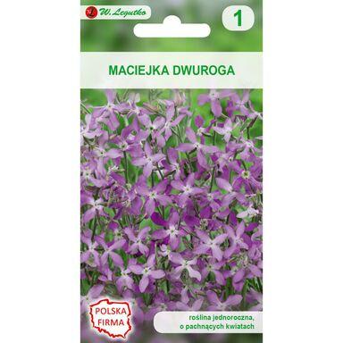 Nasiona kwiatów RÓŻOWOLAWENDOWA Maciejka dwuroga W. LEGUTKO