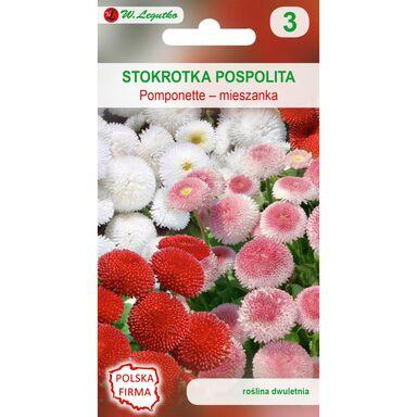 Nasiona kwiatów MIESZANKA Stokrotka pospolita Pomponette W. LEGUTKO