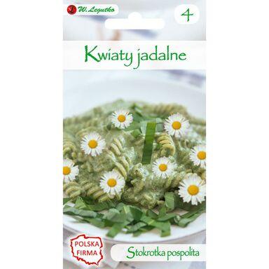 Nasiona kwiatów BIAŁA Stokrotka pospolita W. LEGUTKO
