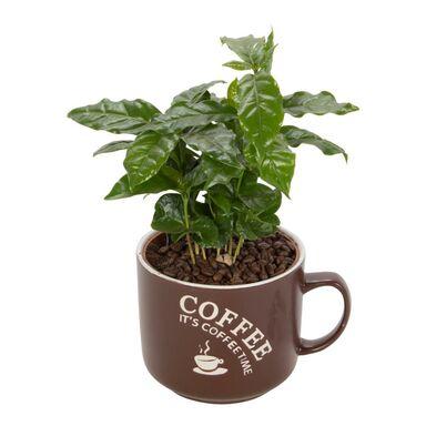 Kawa w ozdobnym kubku MIX 20 cm