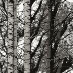 Okleina BRZOZA czarna 45 x 200 cm