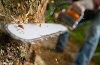 Wniosek o usunięcie drzewa. Kiedy należy go złożyć?