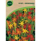 Cebulki kwiatów MIX Krokosmia (Montbrecja) 10szt. GEOLIA