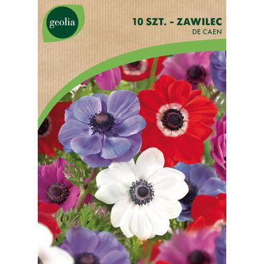 Cebulki kwiatów DE CAEN Zawilec 10szt. GEOLIA