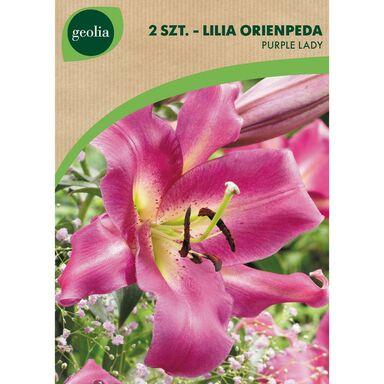 Cebulki kwiatów PURPLE LADY Lilia drzewiasta 2szt. GEOLIA