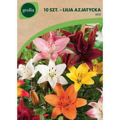 Lilia azjatycka MIX 10 szt. GEOLIA