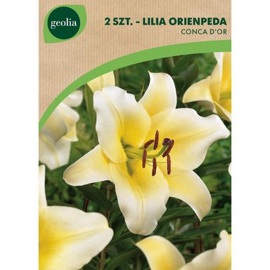 Cebulki kwiatów CONCA D'OR Lilia drzewiasta 2szt. GEOLIA