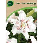 Cebulki kwiatów MUSCADET Lilia orientalna 2szt. GEOLIA