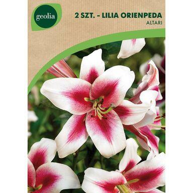 Cebulki kwiatów ALTARI Lilia drzewiasta 2szt. GEOLIA