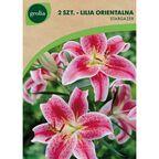 Lilia orientalna STARGAZER 2 szt. cebulki kwiatów GEOLIA