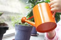 Pielęgnacja roślin doniczkowych zimą