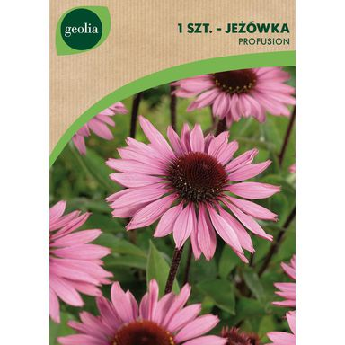 Cebulki kwiatów PROFUSION Jeżówka 1szt. GEOLIA