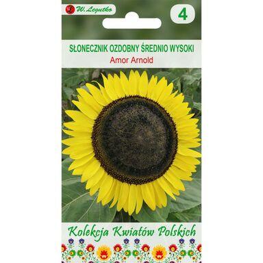 Słonecznik ozdobny AMOR ARNOLD nasiona tradycyjne 2 g W. LEGUTKO