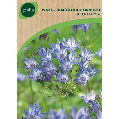 Cebulki kwiatów QUEEN FABIOLA Brodiea (Hiacynt kalifornijski) 15szt. GEOLIA