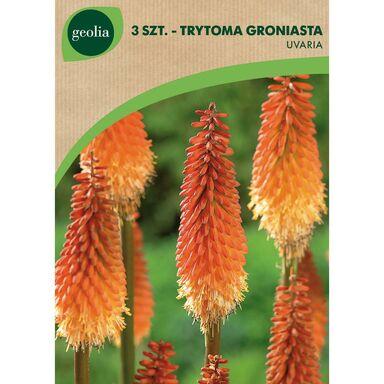 Cebulki kwiatów Trytoma groniasta 3szt. GEOLIA
