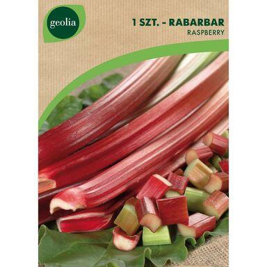 Rabarbar RASPBERRY 1 szt. cebulki warzyw GEOLIA