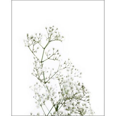 Obraz GYPSOHILA 40 x 50 cm