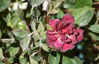 Choroby roślin ozdobnych – co zagraża twoim roślinom w ogrodzie?