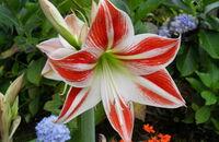 Zwartnice – ozdobne kwiaty na zimowe miesiące