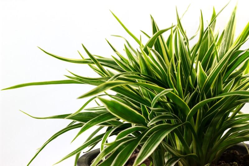 Wspaniały Jak dobrać odpowiednie rośliny do biura - porady Leroy Merlin TF05