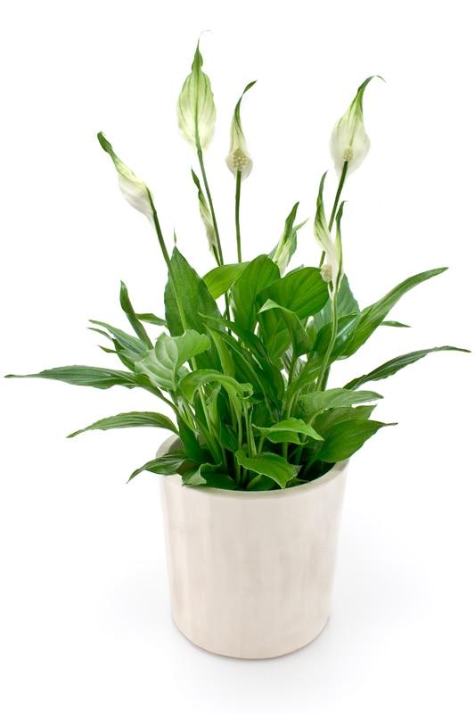 Oryginał Jak dobrać odpowiednie rośliny do biura - porady Leroy Merlin CD64