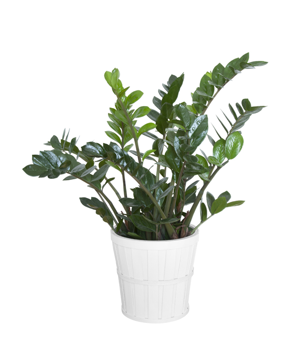 W Ultra Jak dobrać odpowiednie rośliny do biura - porady Leroy Merlin QQ66