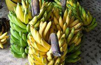 Bananowce na werandzie