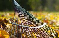Kalendarz ogrodnika – październik