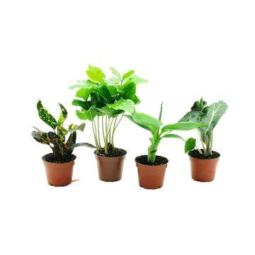 Rośliny zielone MIX 10 cm