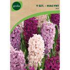 Hiacynt MIX 9 szt. cebulki kwiatów GEOLIA