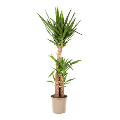Rośliny zielone MIX 130-140 cm