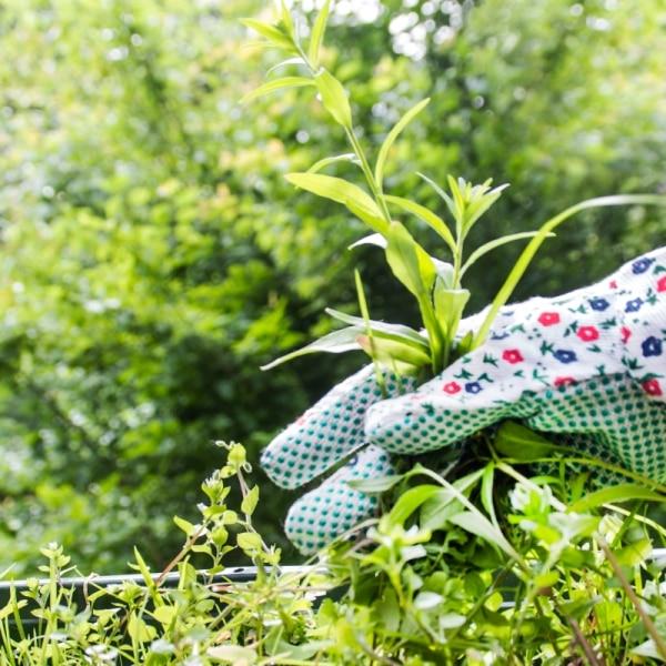 Jak Skutecznie Zwlaszczać Chwasty W Ogrodzie I Na Trawniku Porady
