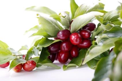 diaforetiko.gr : deren jadalny owoce ΚΡΑΝΙΑ: H πρώτη σούπερ τροφή της Ελλάδας !!