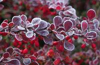 Ogród piękny także zimą