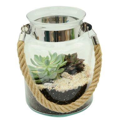Roślina pokojowa MIX Sukulenty w osłonce szklanej 25 cm