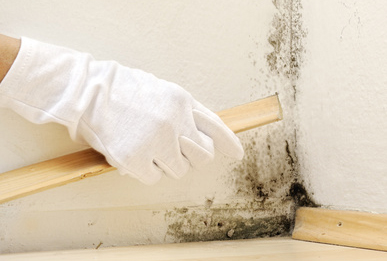 usuwanie grzyba pleśniowego ze ściany