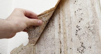 usuwanie pleśni spod tapety