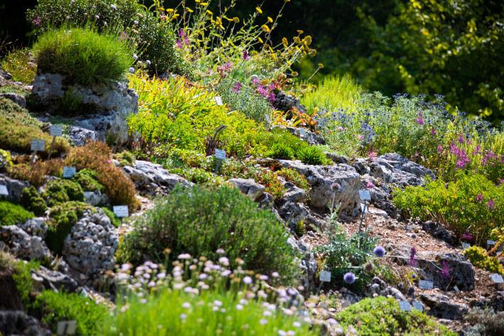 Kamienie i trawa na górce w ogrodzie